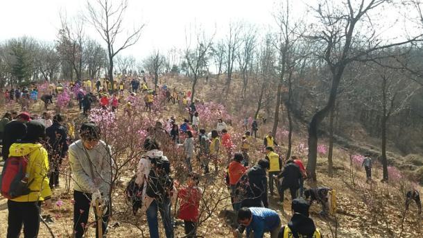 제72회 식목일 기념 내 나무 심기